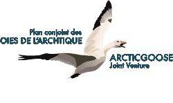 Le Plan conjoint des oies de l'Arctique (PCOA)