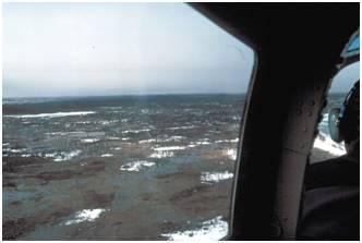 Premier inventaire aérien de la colonie de la baie La Pérouse