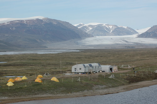 Études sur le terrain de la Grande Oie des neiges, île Bylot, de 1988 à aujourd'hui
