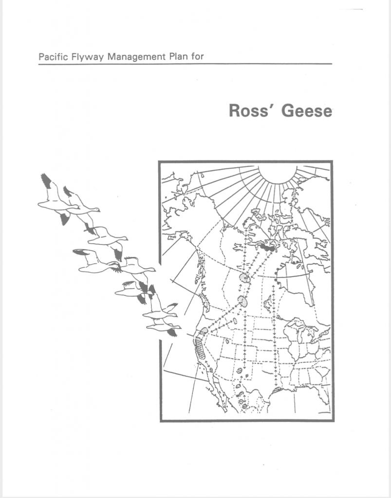 Plan de gestion de l'Oie de Ross