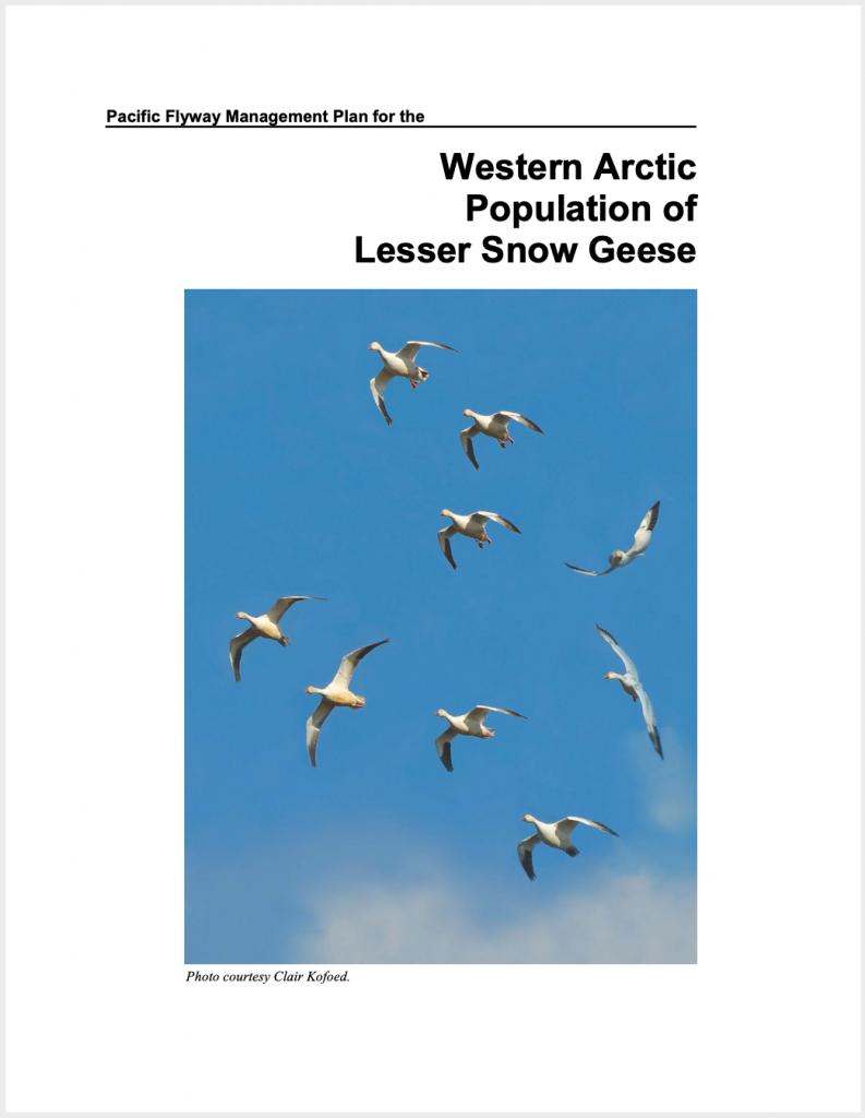 Plan de gestion sur les Petites Oies de l'ouest de l'Arctique